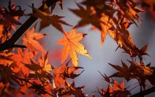 autumn-leave-1415541_640 (1)