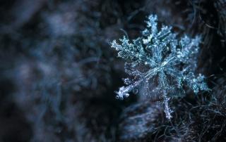 Winter Events in Branson